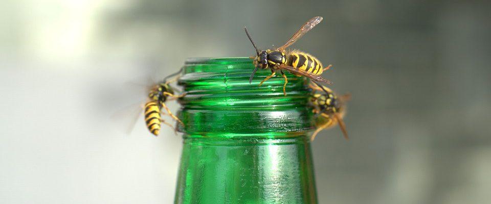 Bijenbekjes